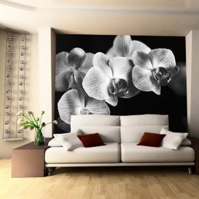 KamFototapeta czarna Falenopsis | fototapeta orchideaykowy kwiat
