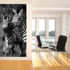 fototapeta z zebrą
