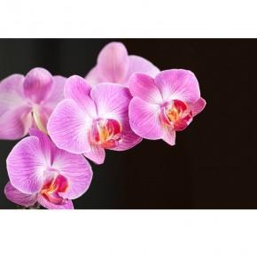 Fototapeta fioletowa orchidea do salonu