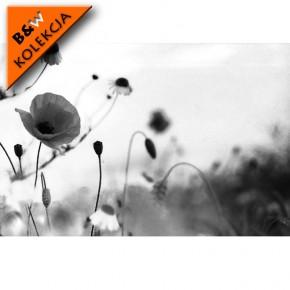 Fototapeta maki - czarno biała