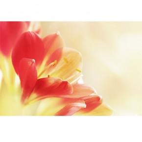 Kliwia | Fototapeta kwiaty