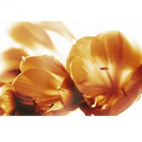 Fototapeta brązowe storczyki