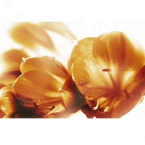 AS_Kwiaty