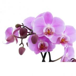 AS_Gałązka kwiatowa