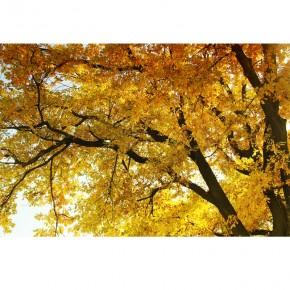 AS_Jesienią