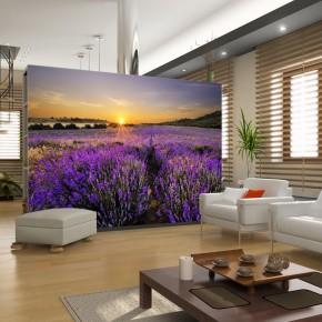 Fototapeta natura wrzosowe pole
