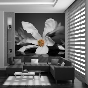 Fototapeta kwiat magnolii