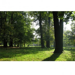 AS_Tajemniczy las