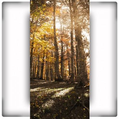 Fototapeta las o świcie