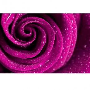 różane płatki