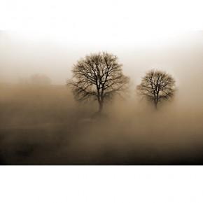 zamglone drzewa