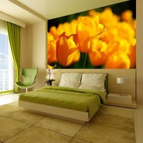 Fototapeta żółty horyzont | fototapety tulipany