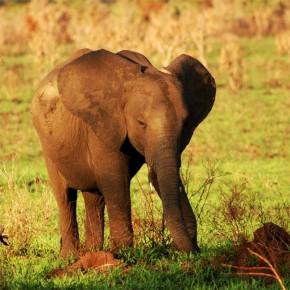Fototapeta mały słoń dla dzieci