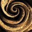 Fototapeta Gold Rose | fototapeta róża