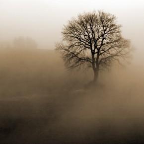 Fototapeta drzewo we mgle
