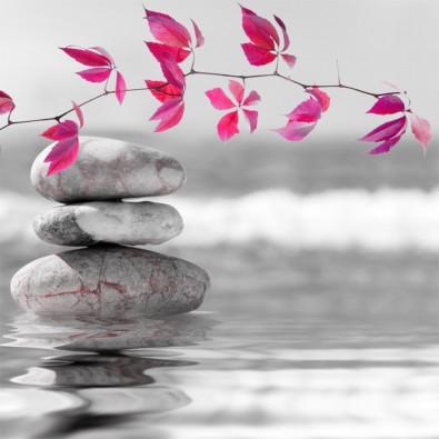 Fototapeta różowe liście i kamienie