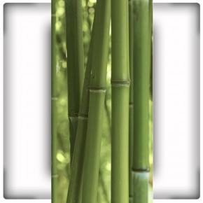 Fototapeta bambusowa na wąską ścianę