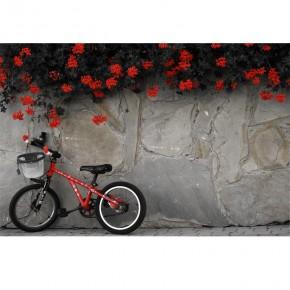 Fototapeta mały rowerek