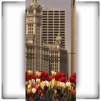 Kwiaty na trawniku | Fototapeta tulipany