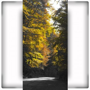 Fototapeta wąska droga w lesie