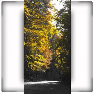 Wąska droga w lesie