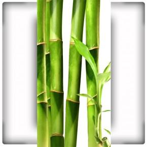 Fototapeta zielone liście bambusowe