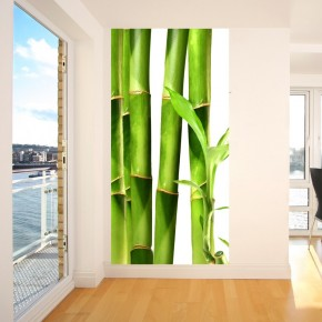Fototapeta zielone bambusy