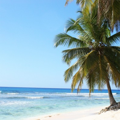 Fototapeta palma na plaży