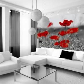 Fototapeta łąka czerwonych maków | fototapety maki