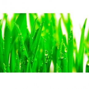 Jasno zielona trawa