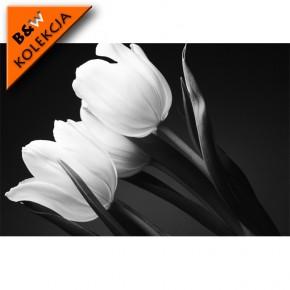 czarno białe tulipany