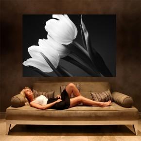 Fototapeta tulipany czarno białe