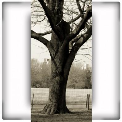 Fototapeta pień drzewa
