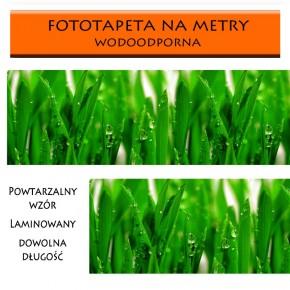 laminowana z trawą