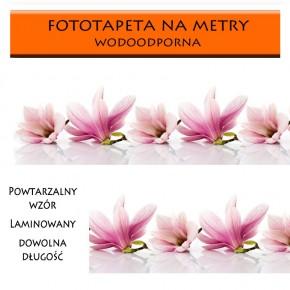 Fototapeta poranek w magnoliach