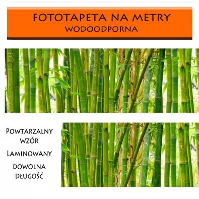 Fototapeta bambusowa dżungla