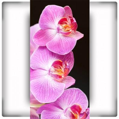 Fototapeta z różową orchideą na czarnym tle