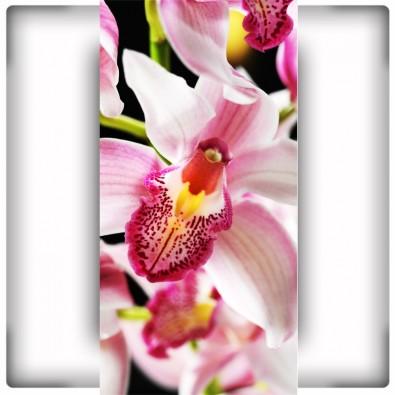 Fototapeta zaczarowana flora