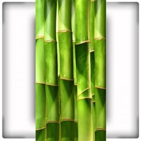 Fototapeta bambus do przedpokoju