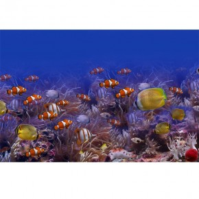 Fototapeta rafa koralowa - koralowce