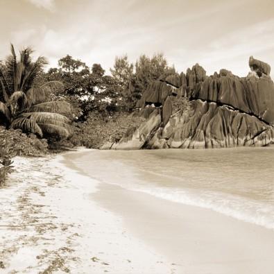 Tropiki | Fototapeta sepia