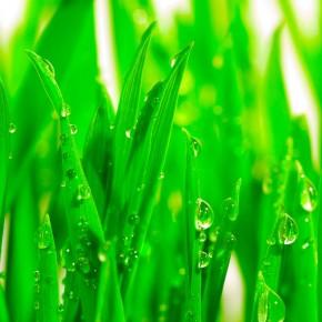 Fototapeta trawnik