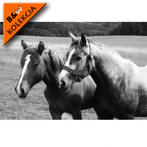 Stado koni - czarno biała
