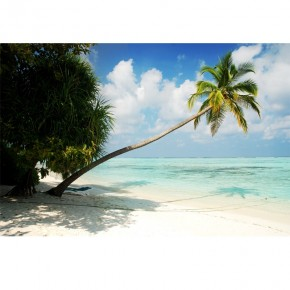 Fototapeta palma tropiki
