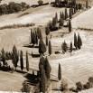 Fototapeta Toskania w kolorze sepii