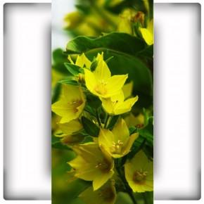 AS_Dziki kwiat
