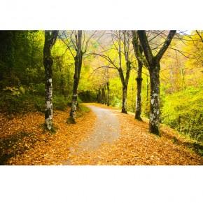droga w parku