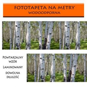 laminowana z brzozami