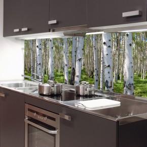 Fototapeta brzozy między meble do kuchni