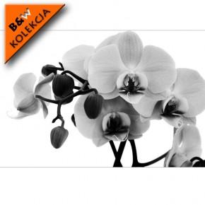 orchidea czarno biała